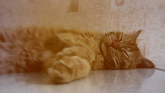 Rysick_the_cat