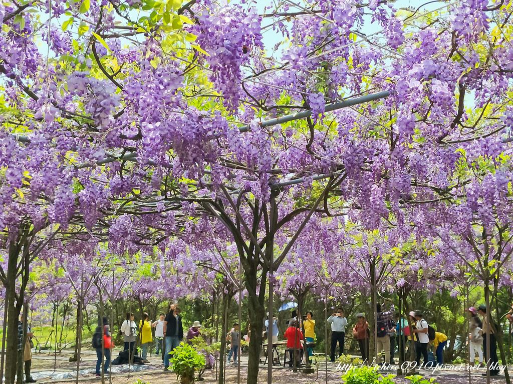 2018331 紫藤咖啡館二館園區_180406_0013