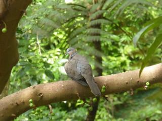 Aviary, Hong Kong Park, Hong Kong