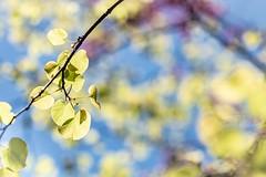 Spring Light Light