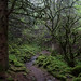 Wales - Mossy Mountain Forest Trail by JimP (in Sarnia)