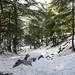 Randonnée dans la forêt de Tigounatine