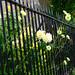 Blooming Railings