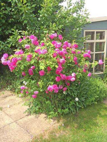 my Cottage garden in June