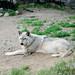 International Wolf Center, Ely 6/22/18 by Sharon Mollerus