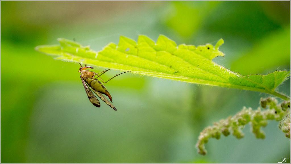 Envie d'insectes 27432402177_377531e865_b