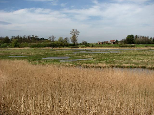 Marshes near Ramsholt