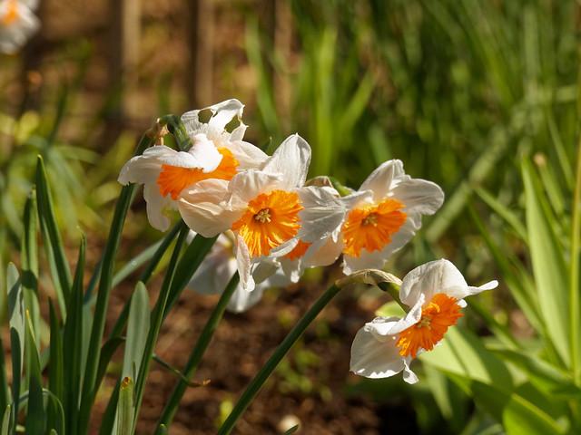 Bon dimanche à tous mes Amis de Flickr's - Happy Sunday for all my Flickr's Friends