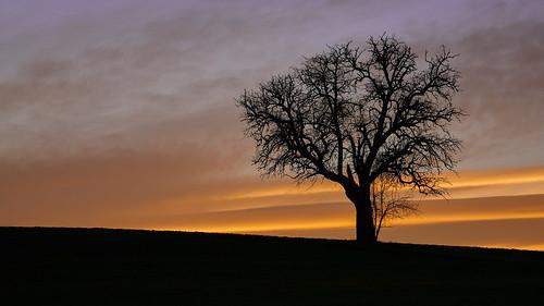 baum einsam abendrot sonnenuntergang stimmung afterglow silhouette