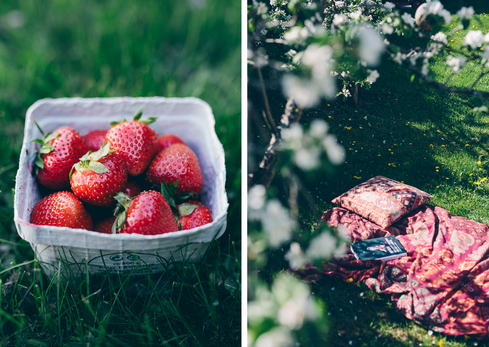 Strawberries & Apple Trees | Cashew Kitchen