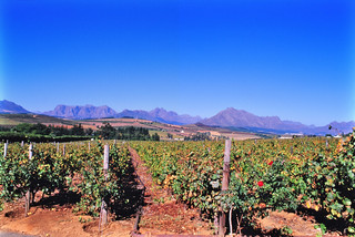 Vineyards of Stellenbosch