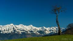 L'arbre et les Vanils (Switzerland)