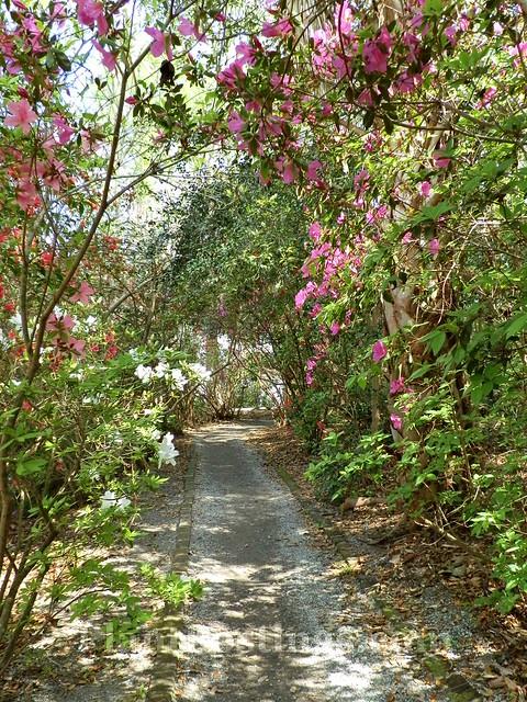 4 pathway
