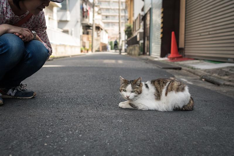 北千住の路地で出会ったネコ