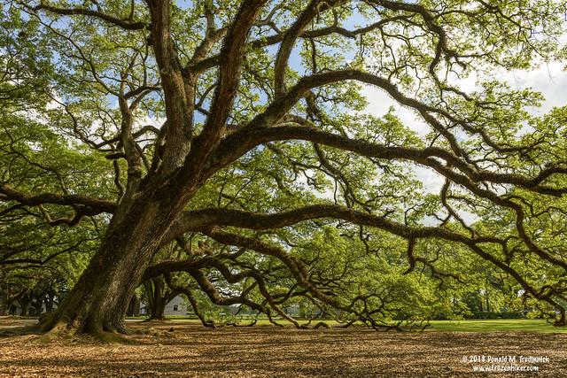 Oak Alley Plantation Grounds, Nikon D850, AF-S Zoom-Nikkor 24-70mm f/2.8G ED
