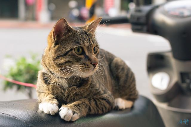 檳榔攤養的貓