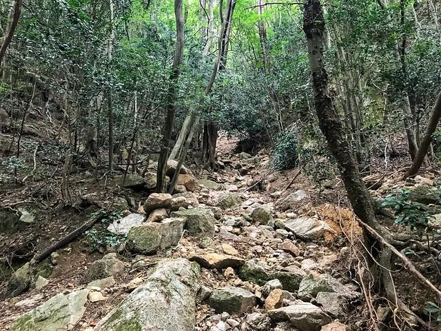 仙ヶ岳 南尾根 ガレ