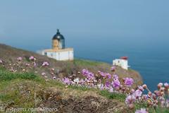 St. Abb's Head/SCO - Lighthouse