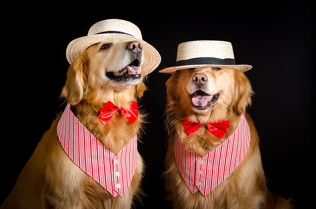 Canine Crooners