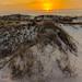 Tybee Island by SachinChitale