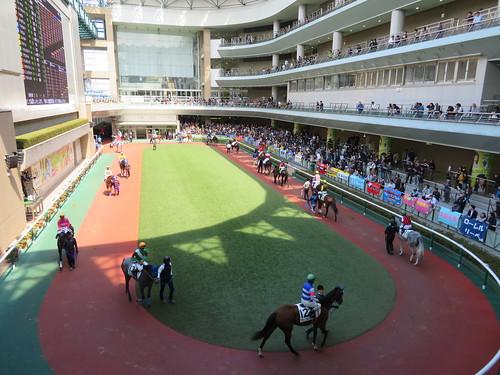 福島競馬場のパドックを3階から見下ろす
