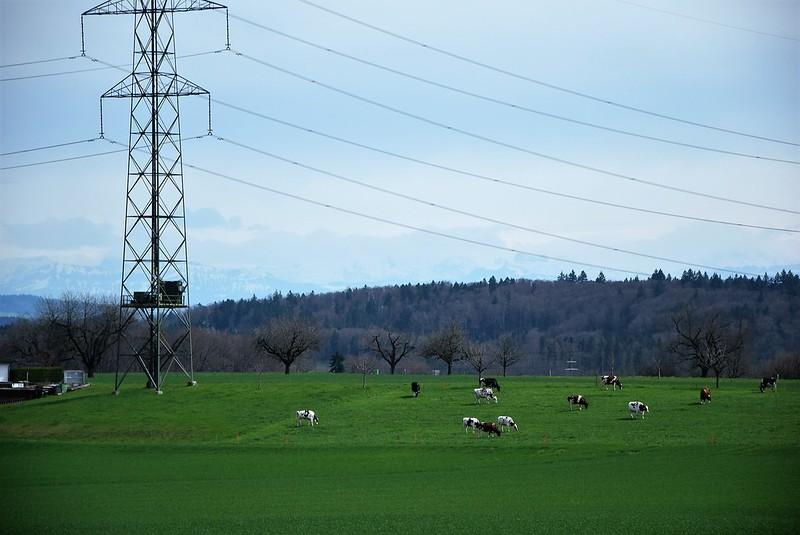 Road to Niederbipp11.04 (9)