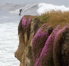 Surfing, Santa Cruz