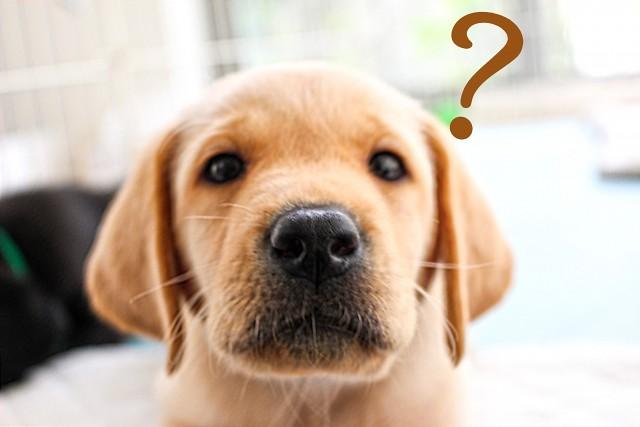 犬のシャンプーについて考える犬