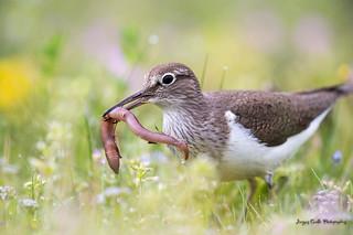 Petit déjeuner sur l'herbe