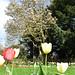 (106/365) Monday April 16th