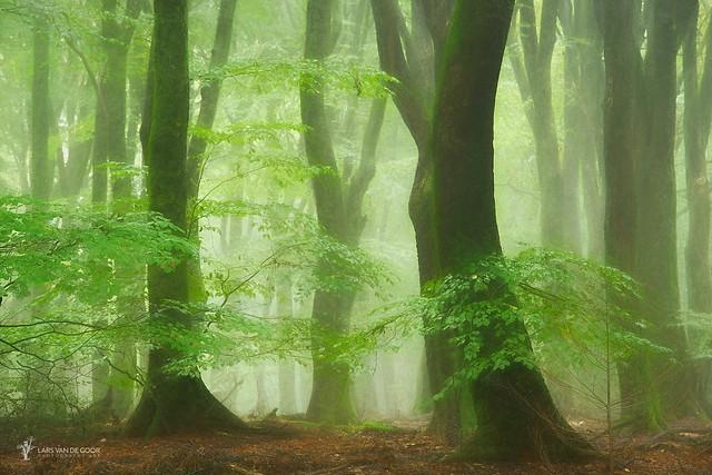 Tutu Wood