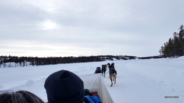 Beck's Kennels dog sledding