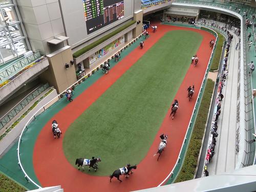 福島競馬場の5階から見たパドック