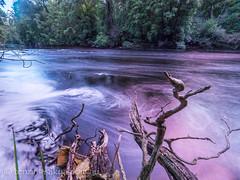 Frankland river 2