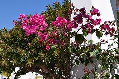The flowers - Plaza Canterero