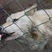 ROG_7539b Wolf