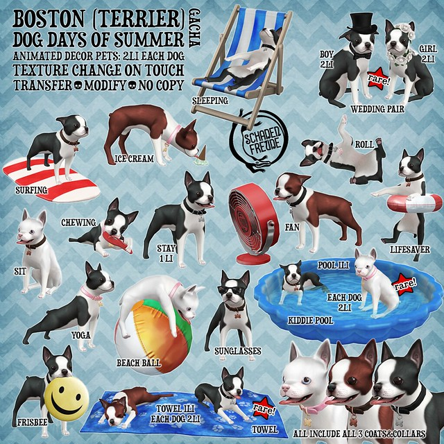 boston dog days of summer key