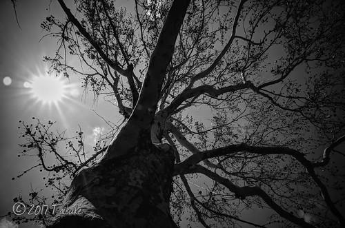 GR2作例:枯れ木を下から撮影