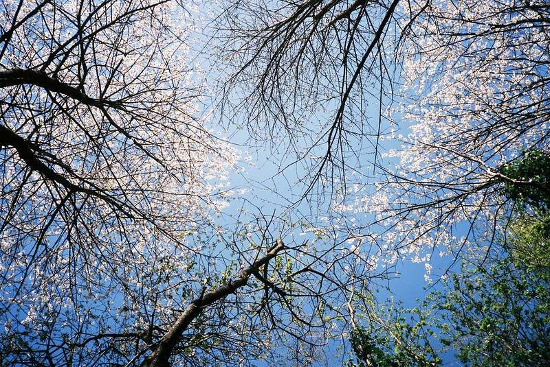 Blossom, Bishops Knoll