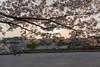 Photo:20180401_171249_1 By gugu800