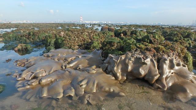 Living reefs at Cyrene