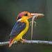 Black-backed Kingfisher [Explore] by BP Chua