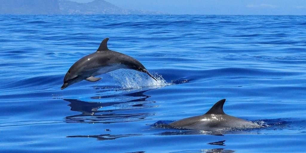 Est-ce que les dauphins ressentent du chagrin ?