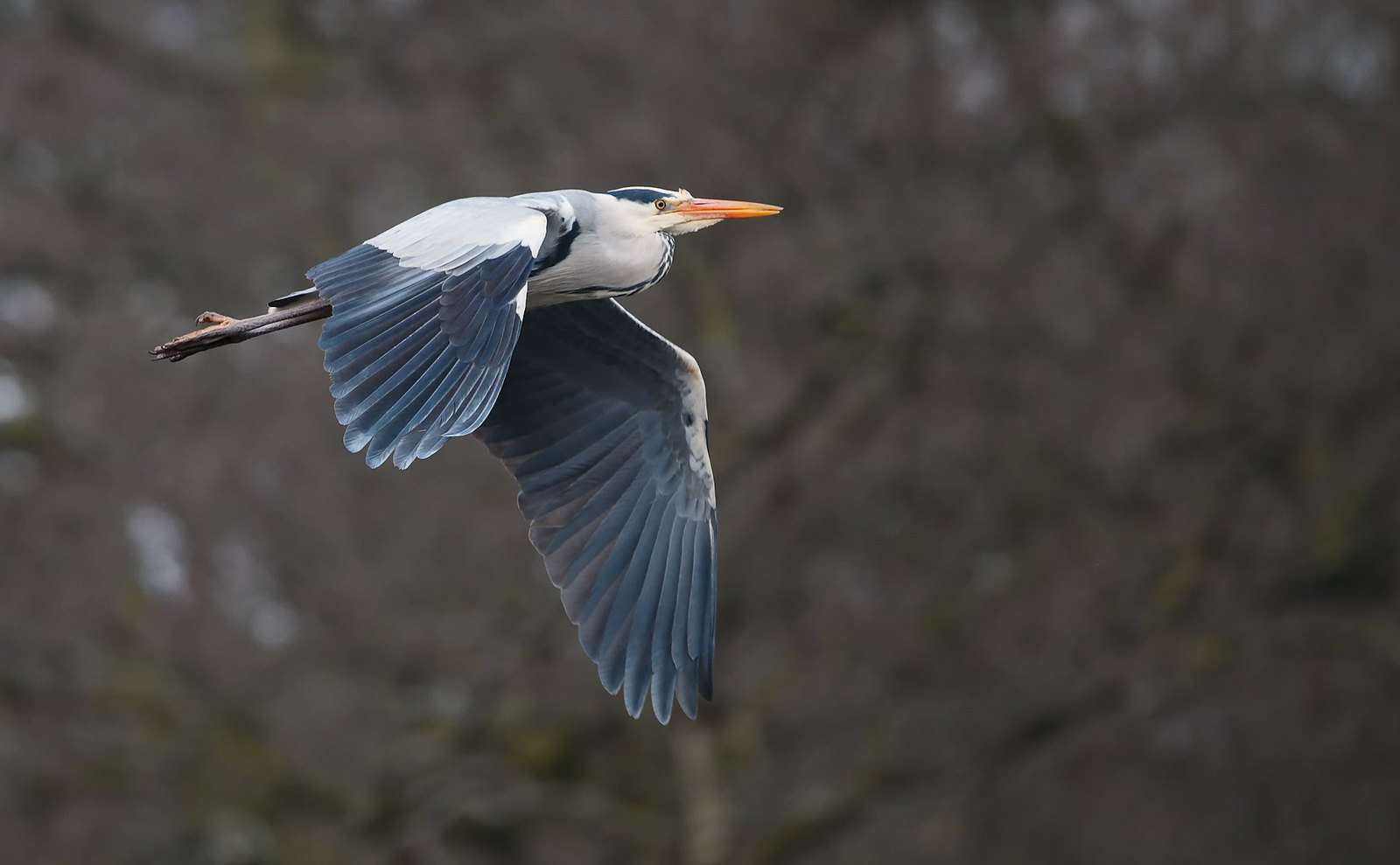 Heronry session