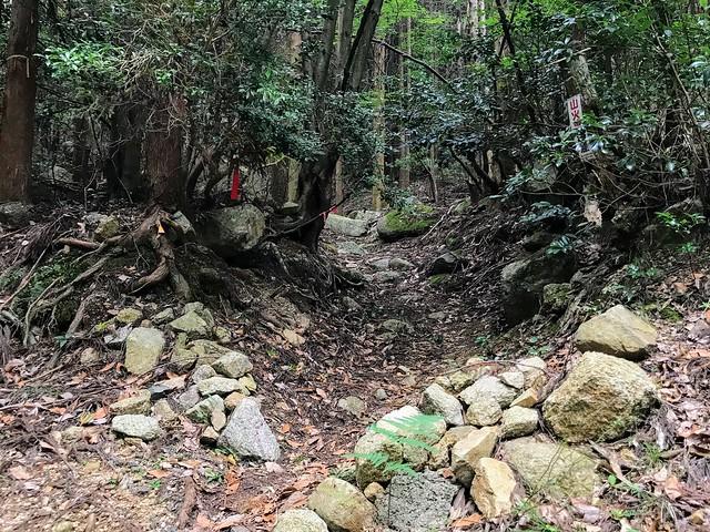仙ヶ岳 南尾根・白谷道 登山道