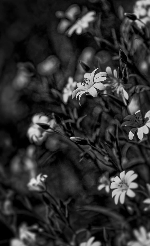 Cest-le-printemps-3000px