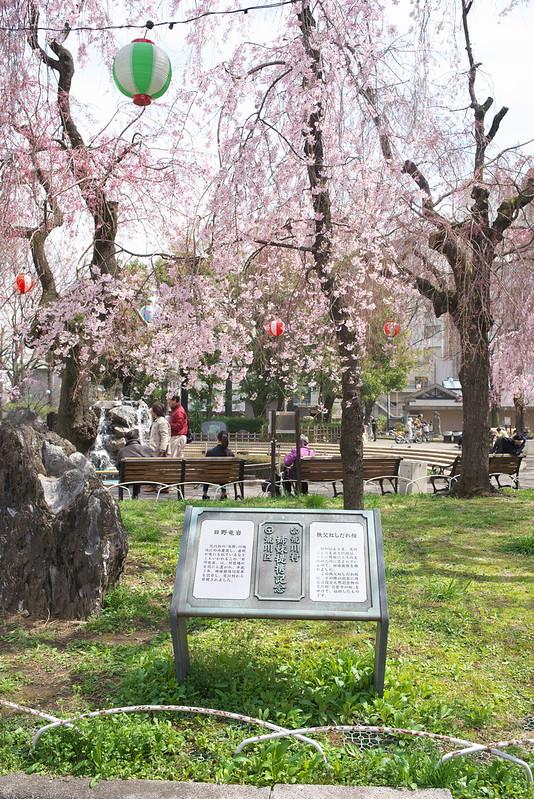 東京春景色