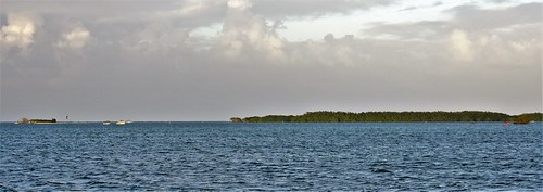 mangroves sainterose basseterre guadeloupe