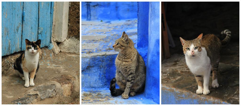 Chefchaouen's cats