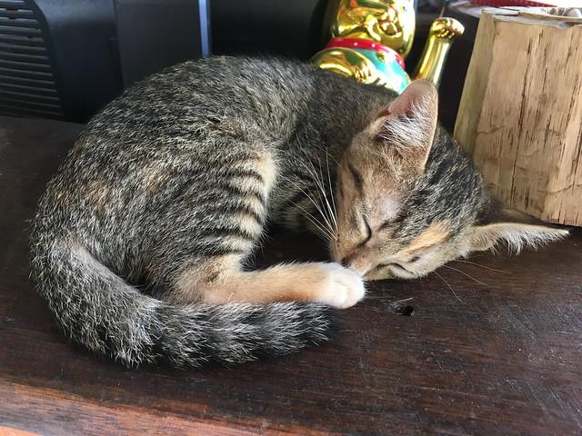 看板子猫さん